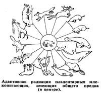 примеры идиоадаптации млекопитающих.